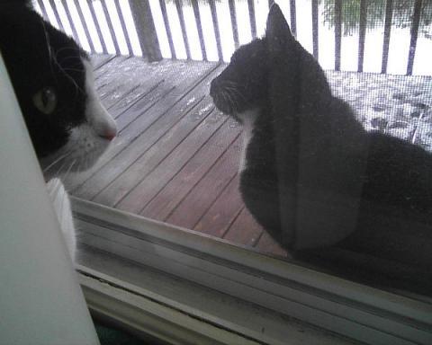 Meeting the neighbor cat
